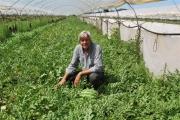 Αγρόκτημα Αντωνόπουλου