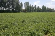 Antonopoulos Farm
